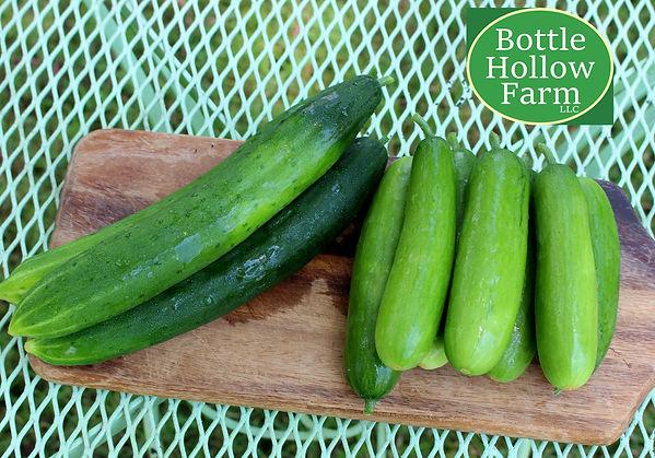 organic English Cucumbers and Mini English Cucumbers at Bottle Hollow Farm.