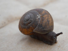 snail carries her own architecture