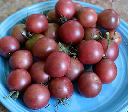 Black Opal tomato. Delicious cherry tomatoes from Bottle Hollow Farm.