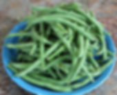fresh organic Green Beans from Bottle Hollow Farm