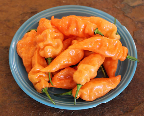 No-Heat Habanero organic peppers from Bottle Hollow Farm. Habanero flavor, aroma and texture; without the burn.