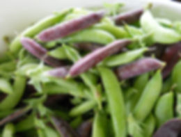 Organic Sugar Snap peas at Bottle Hollow Farm.