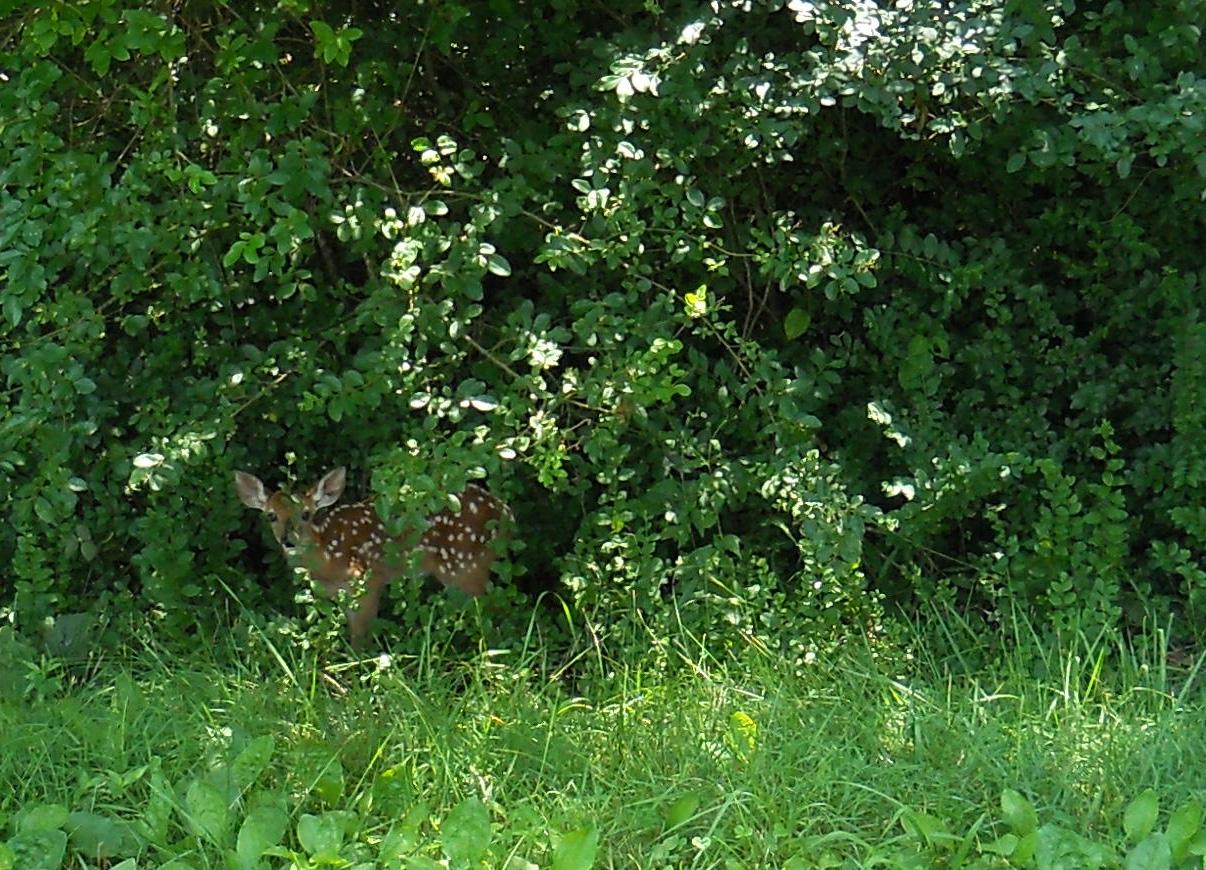 Wildlife 5