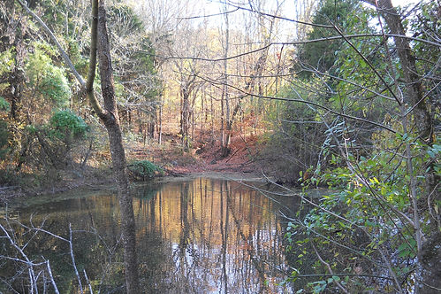 a pond and woodland area at Bottle Hollow Farm