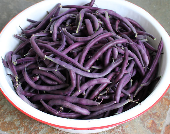 Royalty Purple Pod organic green beans from Bottle Hollow Farm.