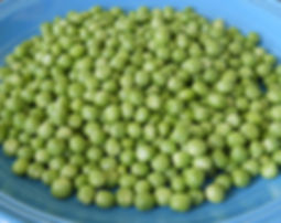 Organic Shelling Peas (English garden peas) at Bottle Holow Farm.