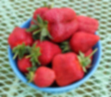 organic Chandler and Camarosa strawberries from Bottle Hollow Farm.
