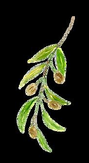 Olive-Leaf.png
