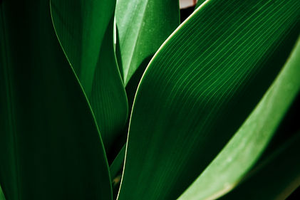 Green tropical plant close-up. Abstract