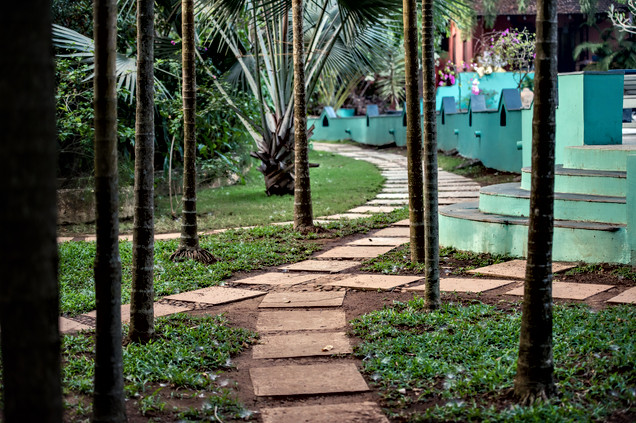 Coconut tree lined walkway