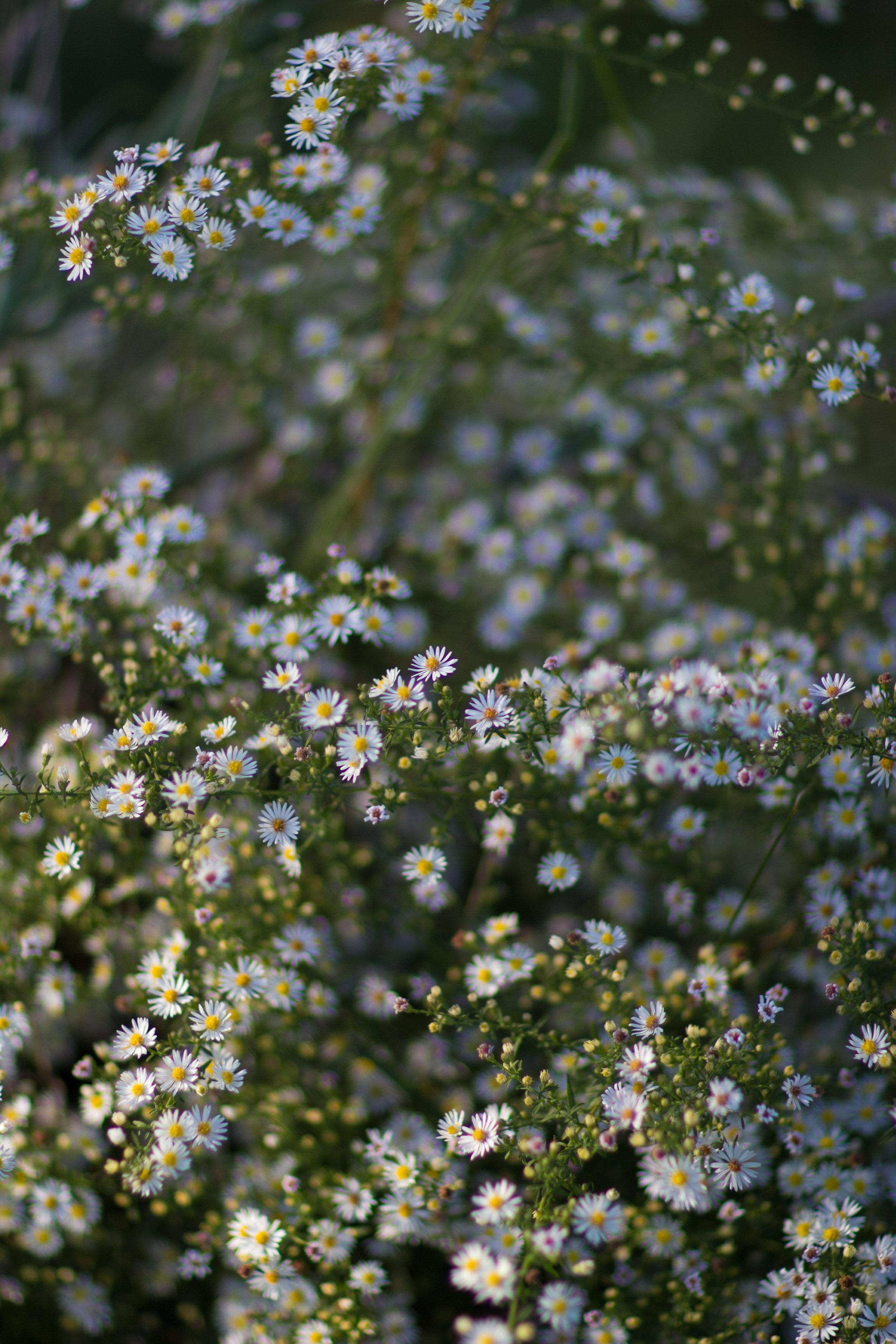 2014.10.06-CaitlinandGreg-Retouched-63.jpg