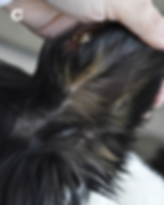 groompic2.png