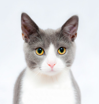 adorable-animal-animal-photography-25980