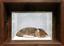 Box no.19