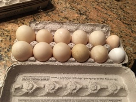 Farm Fresh Duck Eggs