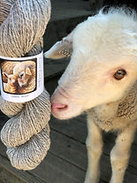 Lamb with yarn