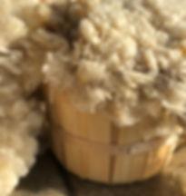 Basket of raw wool