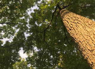 Beneath The Tree
