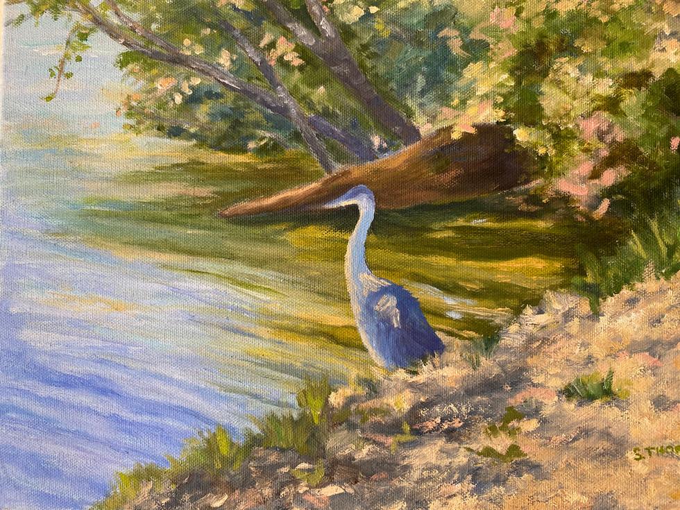 35. My Blue Heron