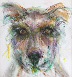39. Eyes of a Shelter Dog