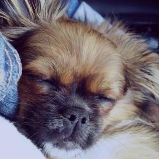 Sleepy B.png