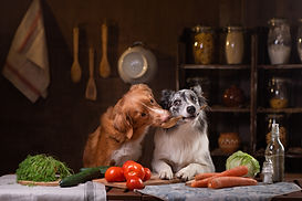 two dogs together in the kitchen are pre