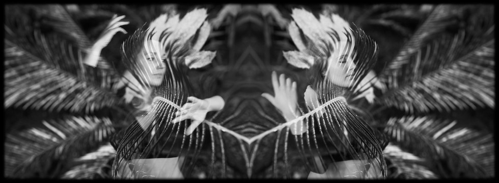 La Forêt Miroir
