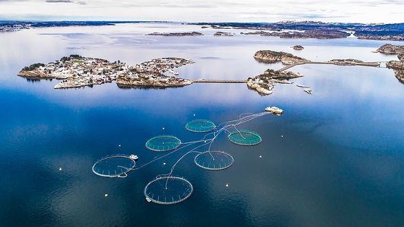 Salmon fish farm. Bergen, Norway..jpg