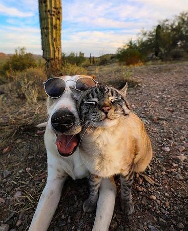 catdog.jpg