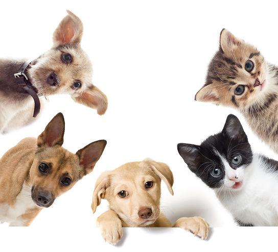 set pet looks .jpg