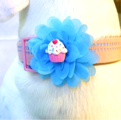 Interchangeable Cupcake &  Popsicle Flower Set -  for dog collar