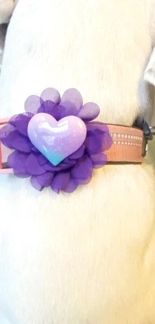 Interchangeable Heart & Popsicle Flower Set - for dog collar