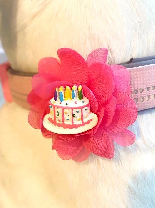 Interchangeable Birthday Cake & Popsicle Flower Set - for dog collar