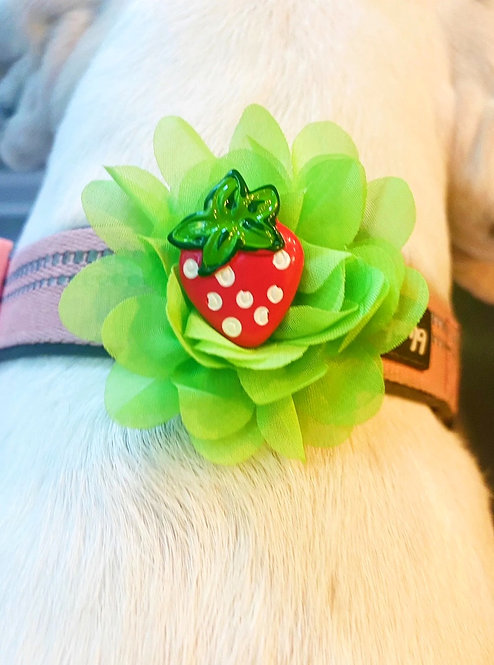 Interchangeable Strawberry & Popsicle Flower Set- for dog collar