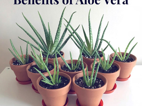 Let's talk Aloe Vera…