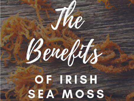 All About A Natural Thyroid Balancer- Irish Sea Moss