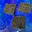 Thumbnail: Cinnamon Coffee Bean Soap