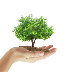 Human hands holding a tree.jpg