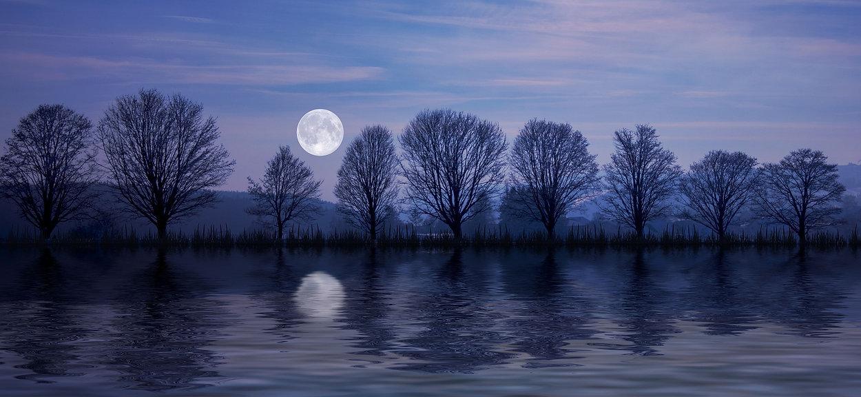 Tree moon 2.jpg