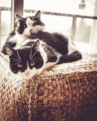 Tony_Cat.jpg