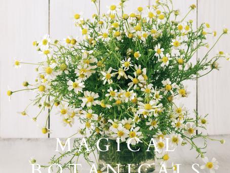 Magical Botanicals - Chamomile
