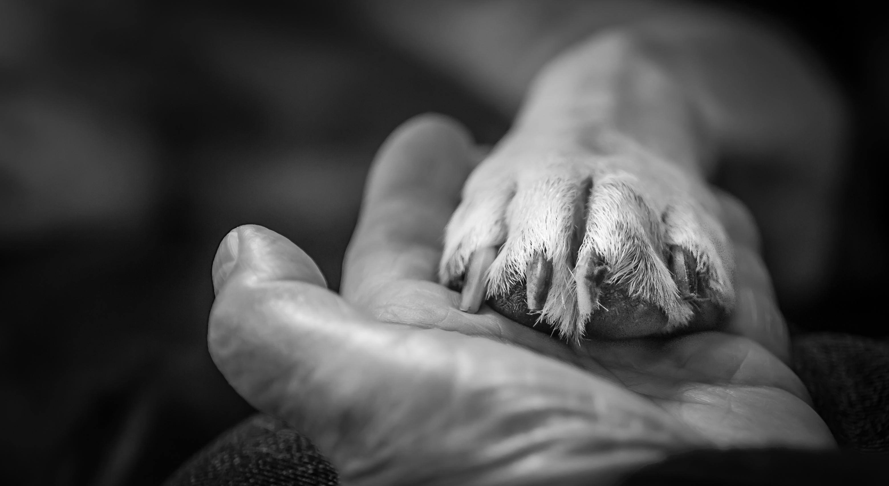 Shake a paw