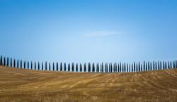 Cypress trees - Tuscany