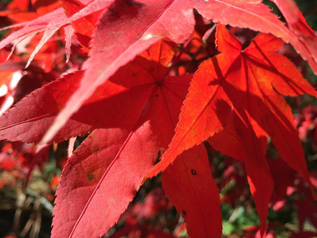 Autumn Practice
