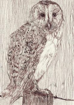 Mono-print Barn Owl no:1