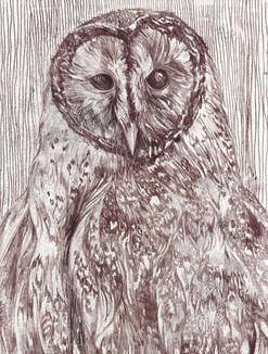 Mono-print Barn Owl no:3