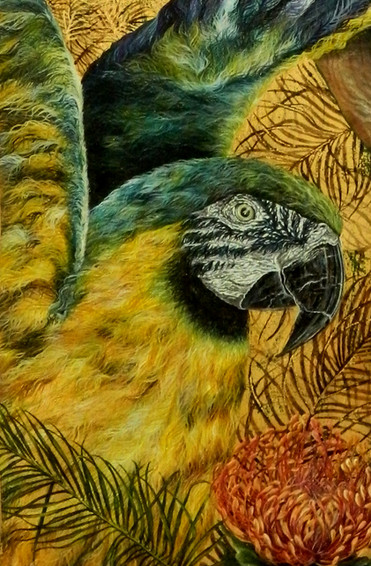 Macaw (detail)