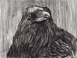 Mono-print Raven