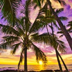 Purple Sky in Sunset