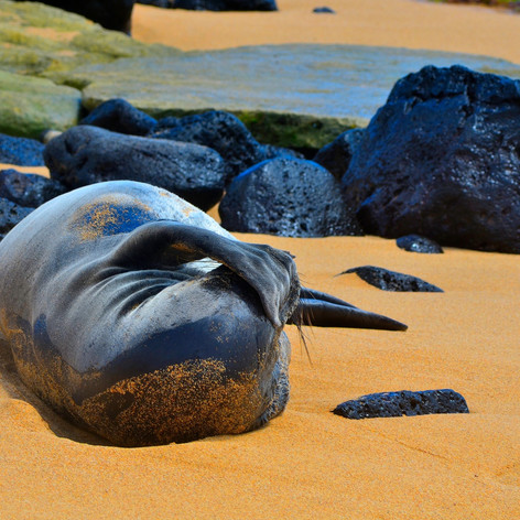 Seal Enjoying the Sun